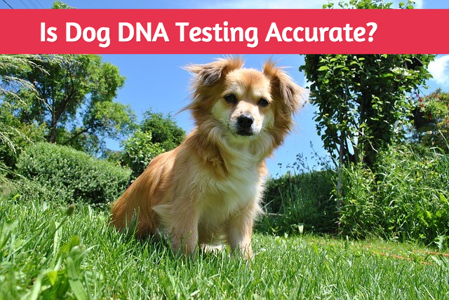 Dna Testing For Dog Breeds Accuracy