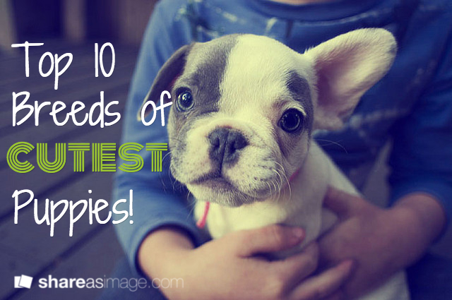 10 cutest puppy dog breeds what dogs have cutest pups