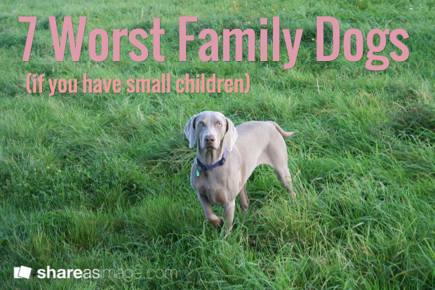Worst Dogs To Train