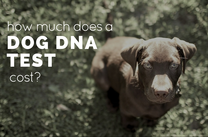 dog dna test cost
