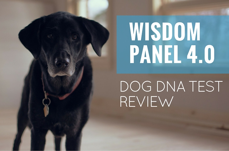 Wisdom Panel Dog Dna Test Reviews