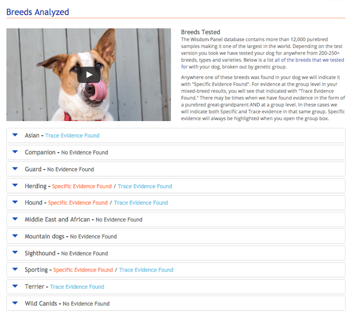 Dog Breed Identifier Test
